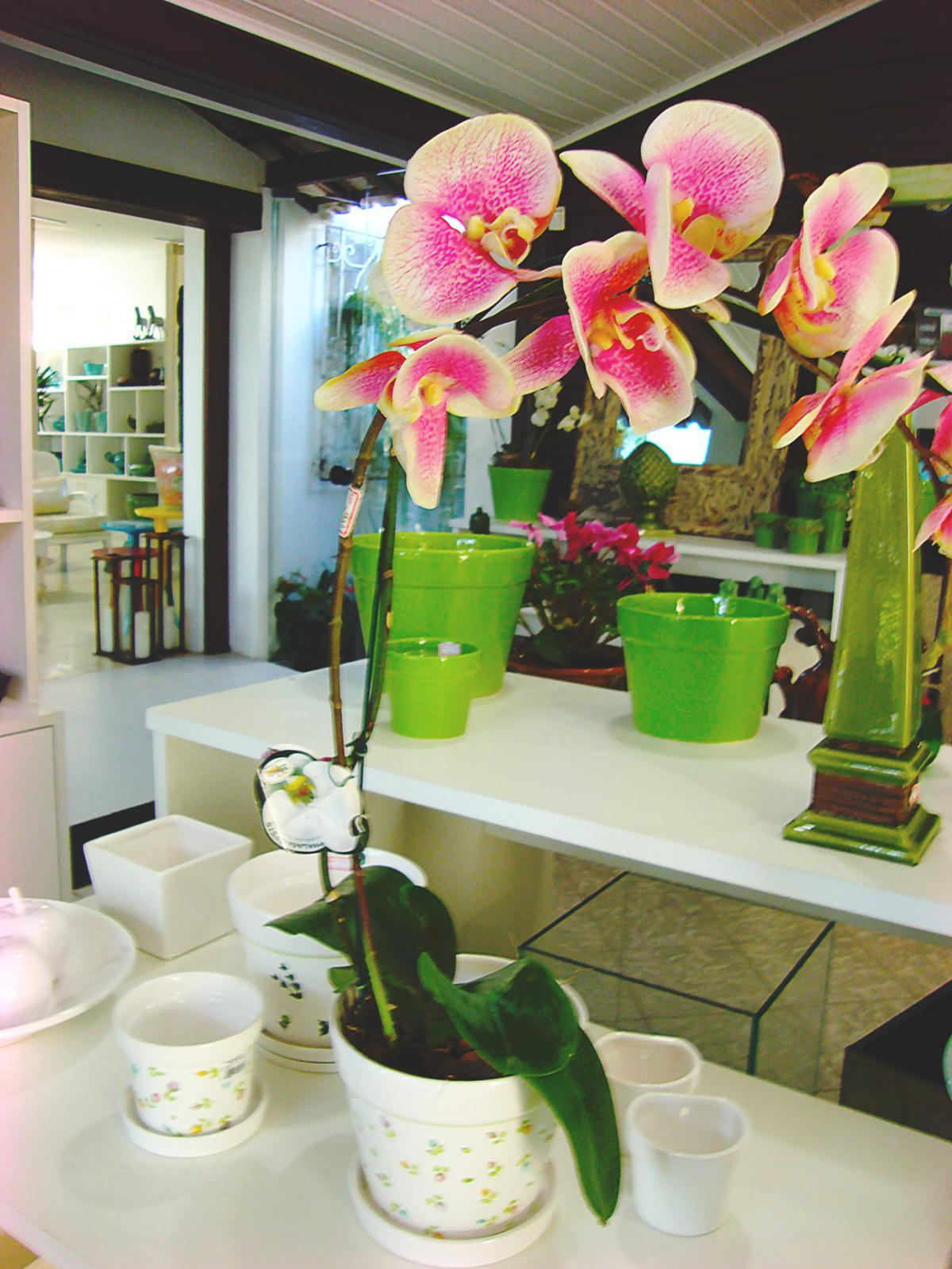 Sua casa mais alegre e bonita com flores em vasos