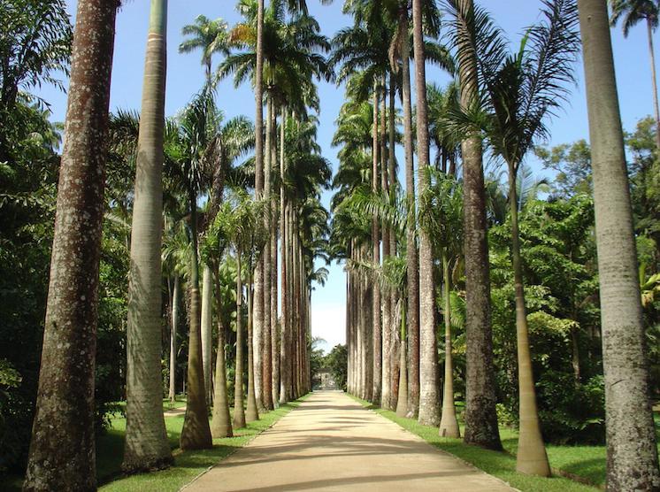 10 palmeiras para encantar sua casa