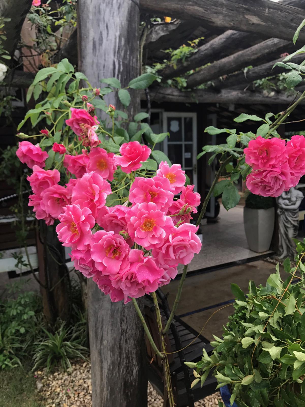Plantas ideais para pergolados