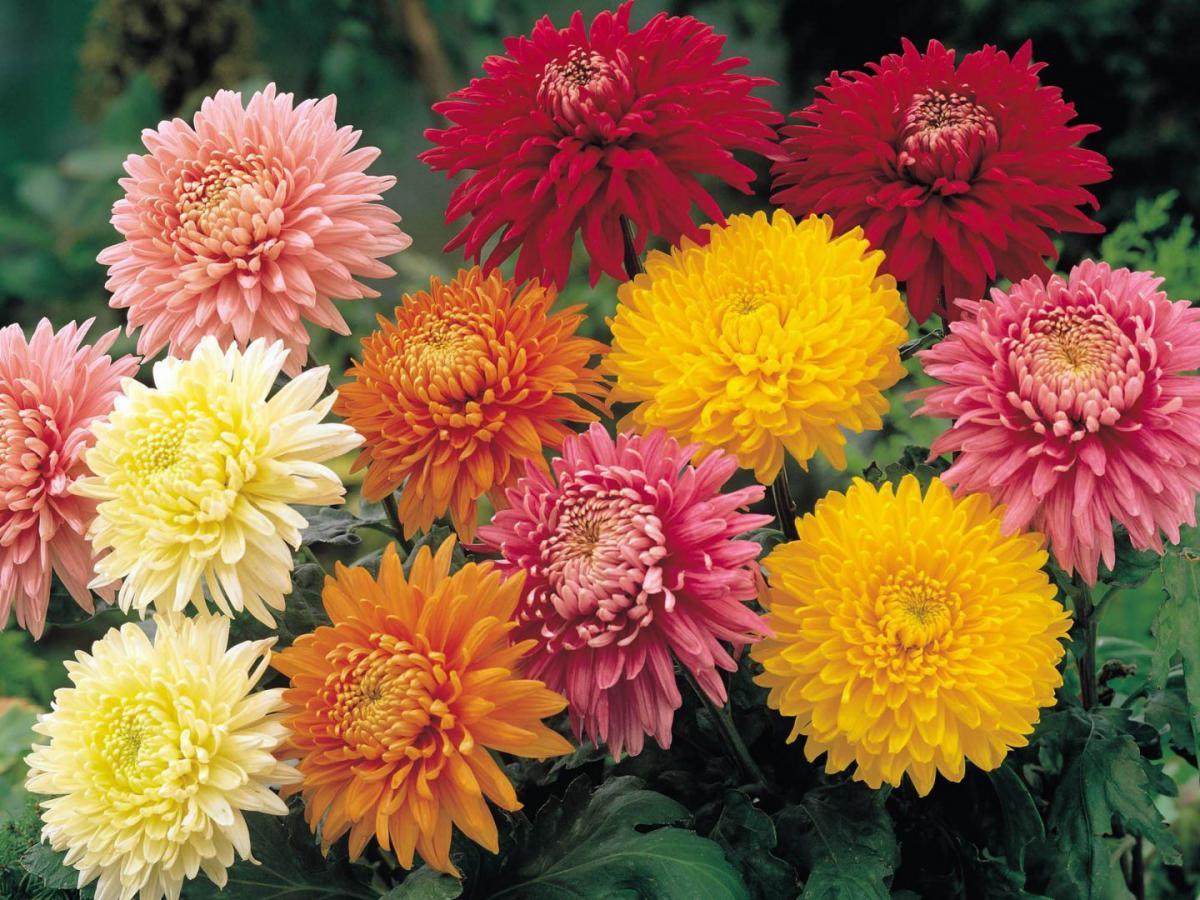 6 tipos de plantas que funcionam como repelente na