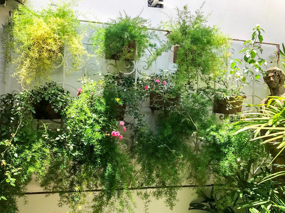 5 dicas para começar seu jardim