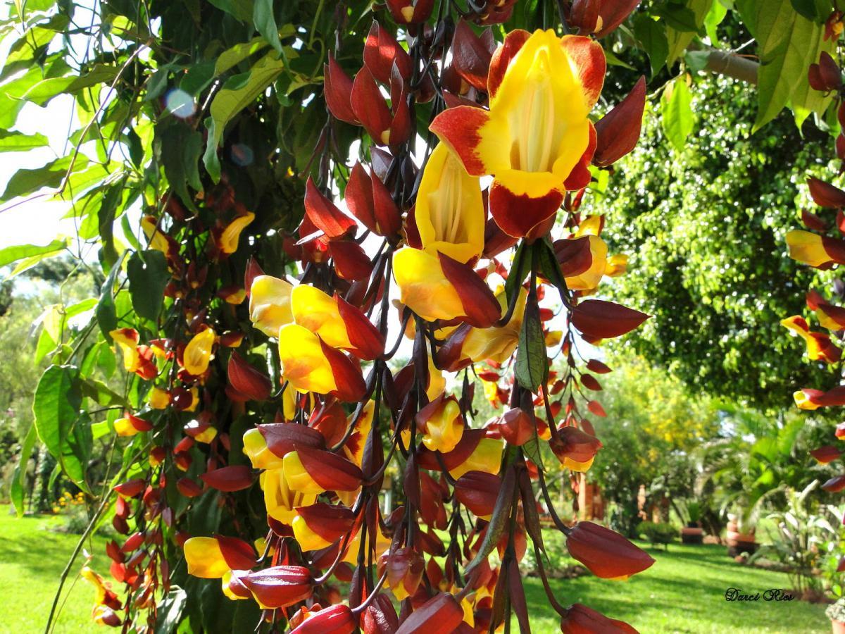 Flores amarelas, mais alegria em seu jardim