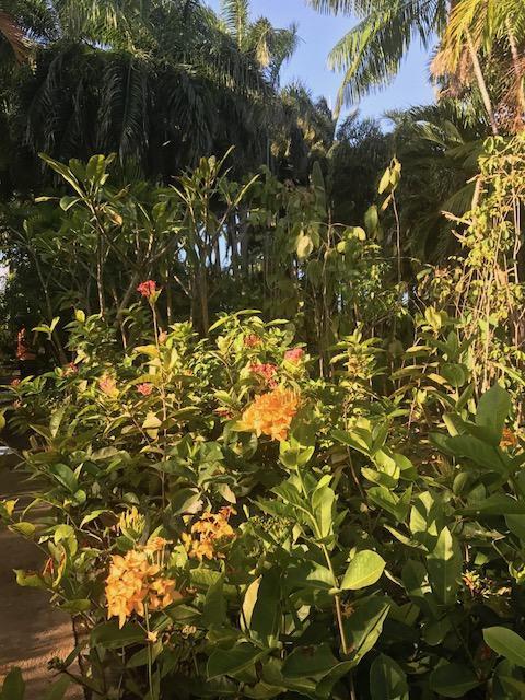 Um passeio pelo Garden