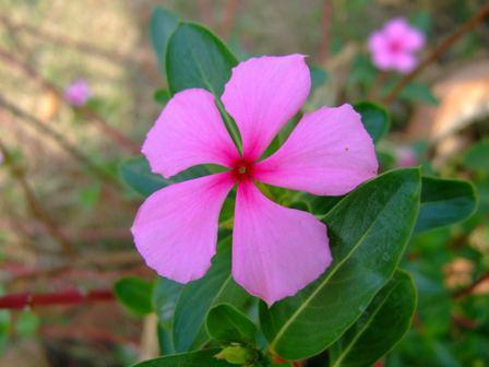 Propriedades Antioxidantes em plantas de jardins