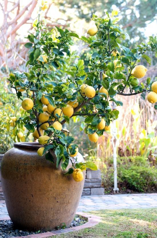 Frutas na varanda. Que legal!