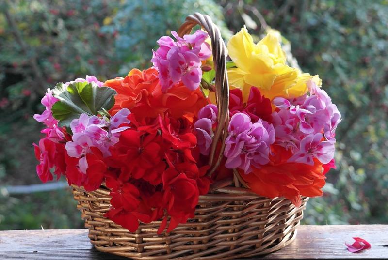 3 plantas que amam o inverno para florescer!