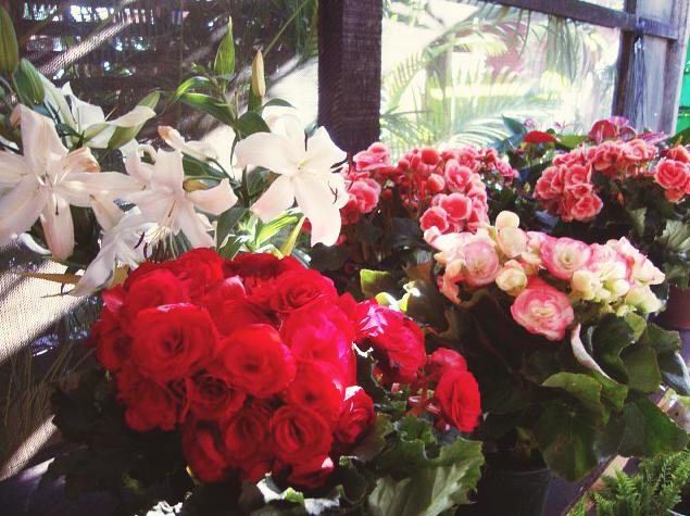 Qual a função das flores na natureza