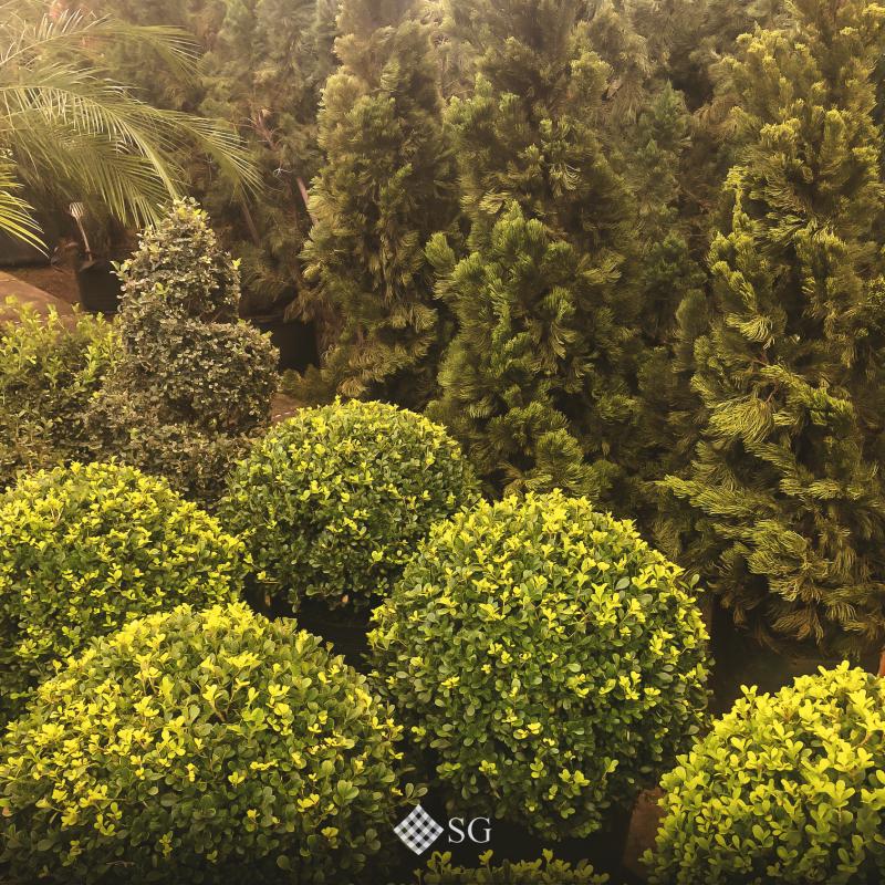 3 tipos de arbustos perfeitos para o jardim