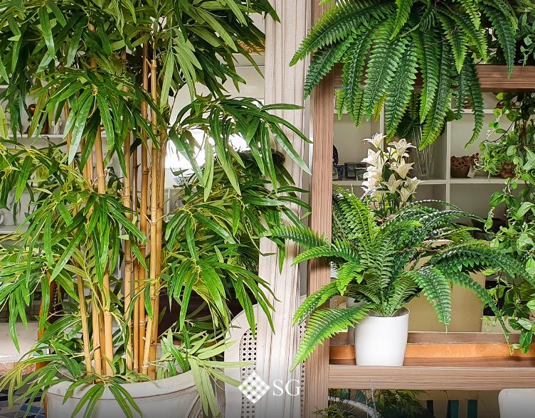 Os benefícios das plantas no Decor