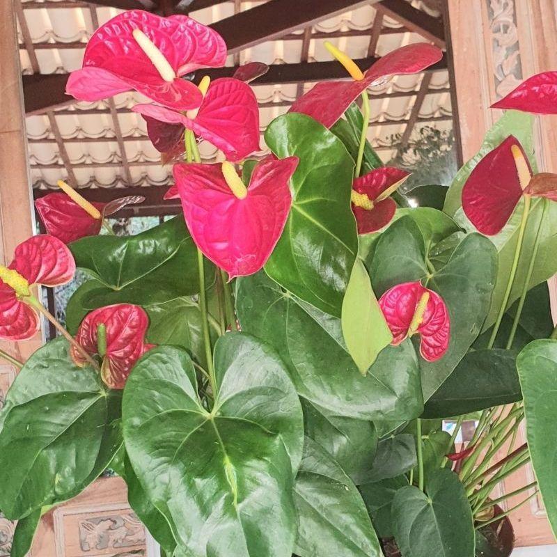 Renove sua casa, usando plantas