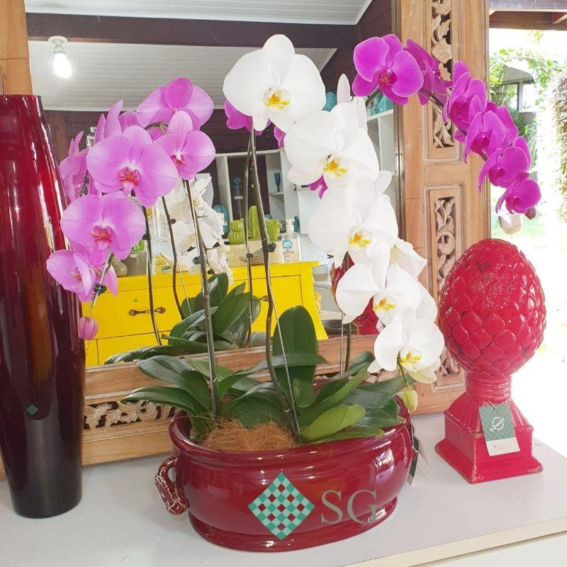 Presenteie com orquídeas no Dia dos Namorados