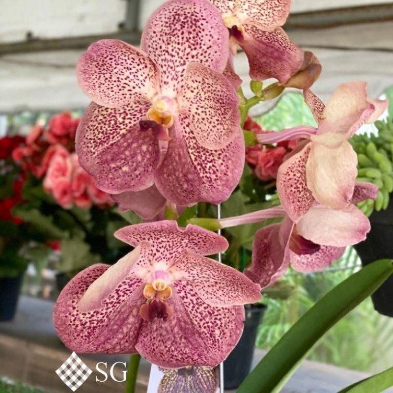 A primavera e a beleza e as cores das orquídeas