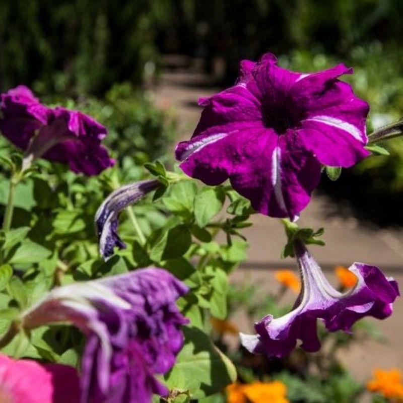 Flores e mais flores para seu jardim