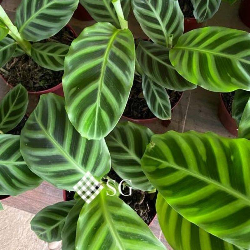 A beleza das plantas de sombra