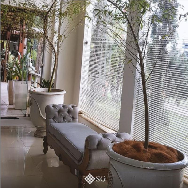 Impacte com plantas grandes dentro de casa