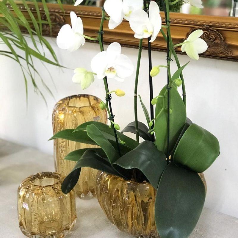 Orquídeas deixam qualquer ambiente mais charmoso