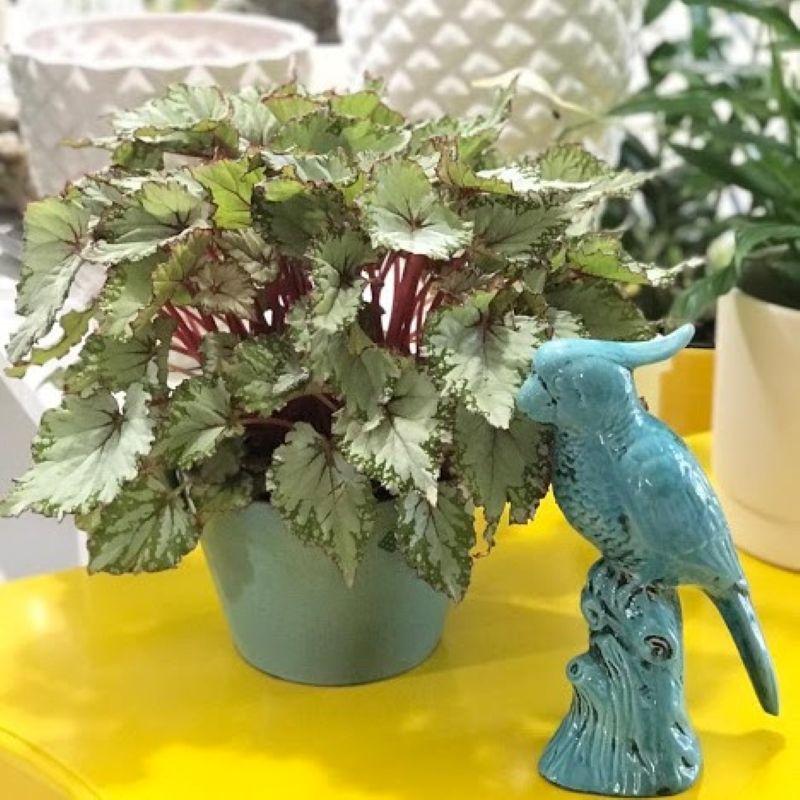 Um toque especial com plantas nesta Páscoa