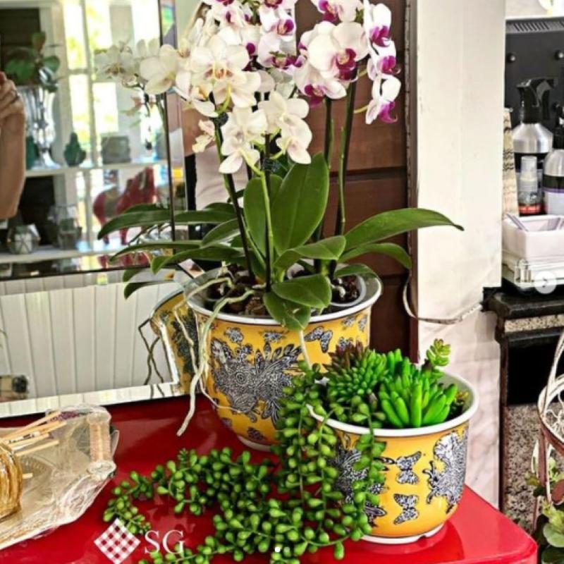 No Dia das Mães, presenteie com plantas em vasos