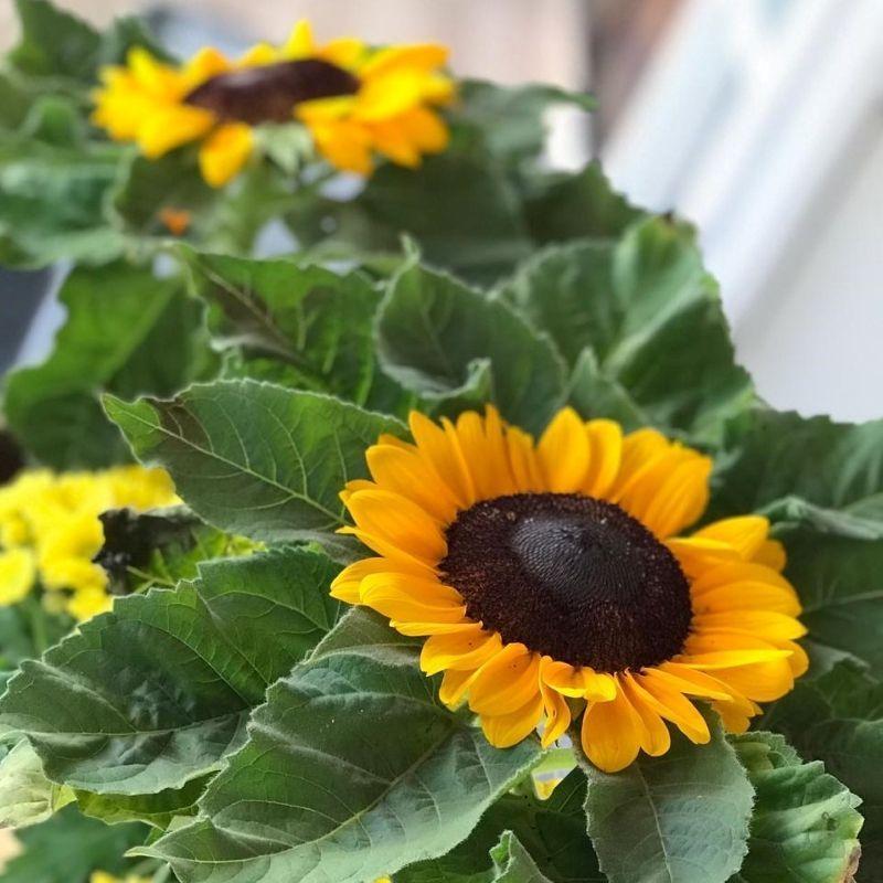 Presenteie seu namorado com plantas e flores